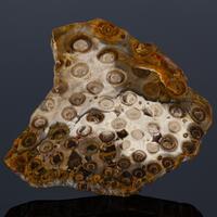 Fossil Fern