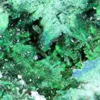 Olivenite Conichalcite & Arsenocrandallite