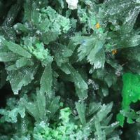Olivenite & Conichalcite