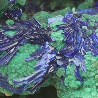 Azurite Malachite Zincolivenite & Cuprite
