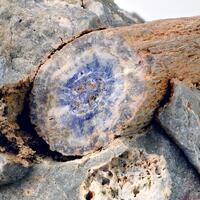 Wittig Minerals: 14 Jun - 21 Jun 2019