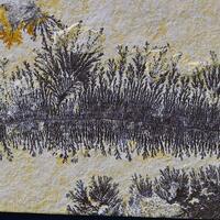 Manganese Dendrites