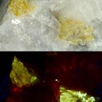 Paraniite-(Y) In Powellite