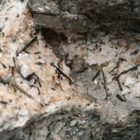 Arisite-(Ce) Natrolite Bastnäsite-(Ce) & Aegirine
