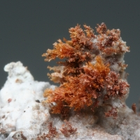 Litharge Zincite & Oxyplumboroméite