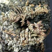 Native Silver With Arsenolite On Native Arsenic