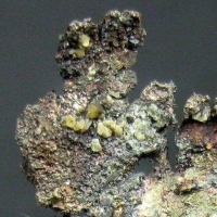 Native Silver & Chlorargyrite
