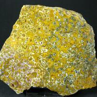 Quartz Var Eisenkiesel Psm Fossil Stromatolite