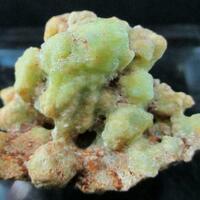 Phosphophyllite Psm Fossil Shell