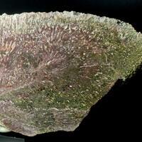 Jasper Psm Fossil Stromatolite