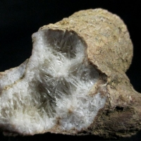Natrolite Psm Fossil Wood