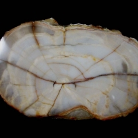 Opal Psm Fossil Wood