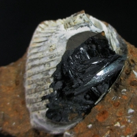 Vivianite Psm Fossil Shell