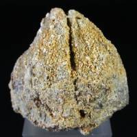 Dolomite & Quartz On Baryte Psm Fossil Shell