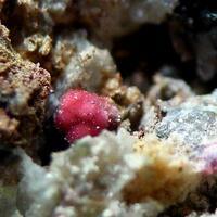 Torbernite & Erythrite