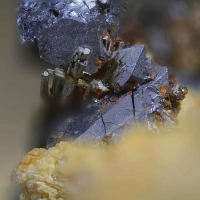 Polydymite With Millerite