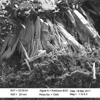 Magnolite