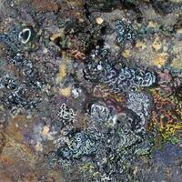 Joy Desor Minerals: 19 Jun - 26 Jun 2018