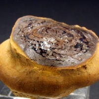 Opal Var Yowah Nut
