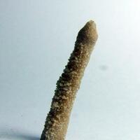 Calcian Pyromorphite