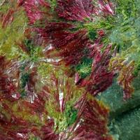 Erythrite On Smolyaninovite