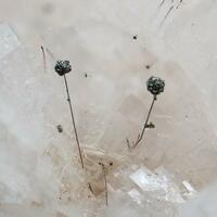 Pyrite Millerite & Dolomite