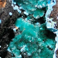 Brochantite & Chrysocolla
