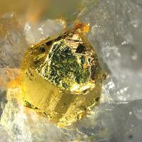 Gold Native
