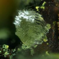 Kidwellite & Leucophosphite