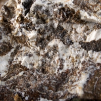 Scarbroite