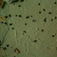 Bariopharmacosiderite & Arsenogorceixite