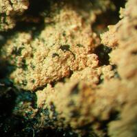 Hydroniumjarosite & Wulfenite