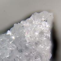Amicite