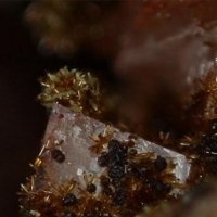 Cobaltlotharmeyerite Cobaltaustinite & Roselite
