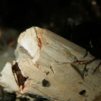 Churchite-(Y) & Niobophyllite