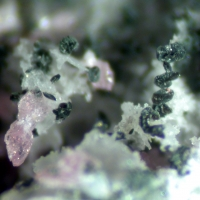 Natrodufrénite Leucophosphite & Strengite