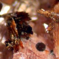 Cobaltlotharmeyerite & Talmessite