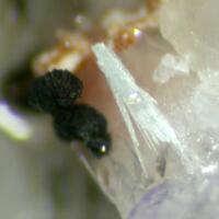 Thortveitite & Chlorite