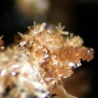 Whiteite-(MnFeMg) & Hureaulite