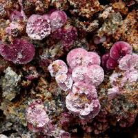 Erythrite & Rösslerite
