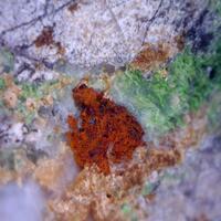 Conichalcite & Manganberzeliite