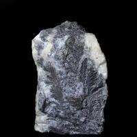 Bismuth Var Feather Bismuth