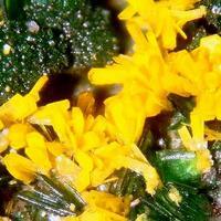 Kasolite Torbernite & Wulfenite