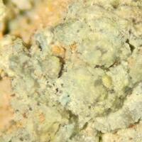 Ilsemannite & Halotrichite