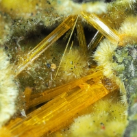 Becquerelite & Uranophane