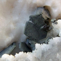 Schalenblende With Galena Var Spinel Law & Chalcopyrite