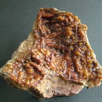 Chalcedony Psm Fossil Coral