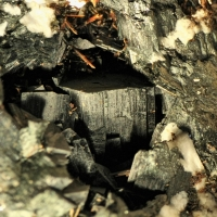 Arfvedsonite Ancylite-(Ce) & Astrophyllite