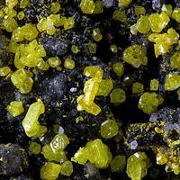 Dimorphite