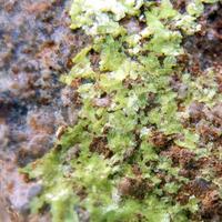 The Minerals: 17 Feb - 24 Feb 2020